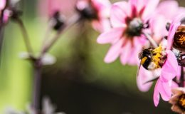 Samen zaaien voor meer biodiversiteit; doet u ook mee?, Giesbers